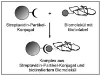 abb1_streptavidin_d